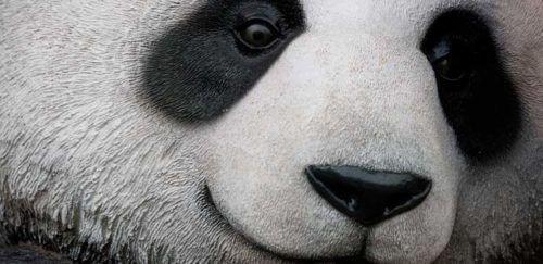 Novo Panda Update 4.1